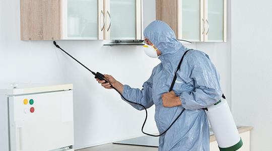 هل لاحظت آثار الفئران في منزلك مؤخراً؟